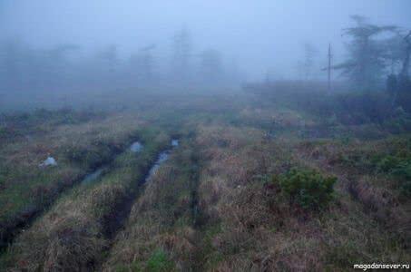Дорога болото